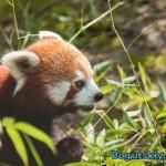Проблема с Firefox — вместо обычной страницы отображается исходный код (как решить проблему)