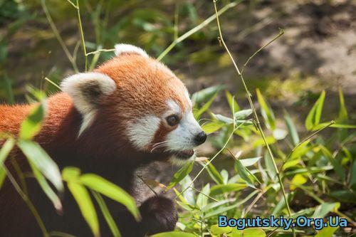 Проблема с Firefox